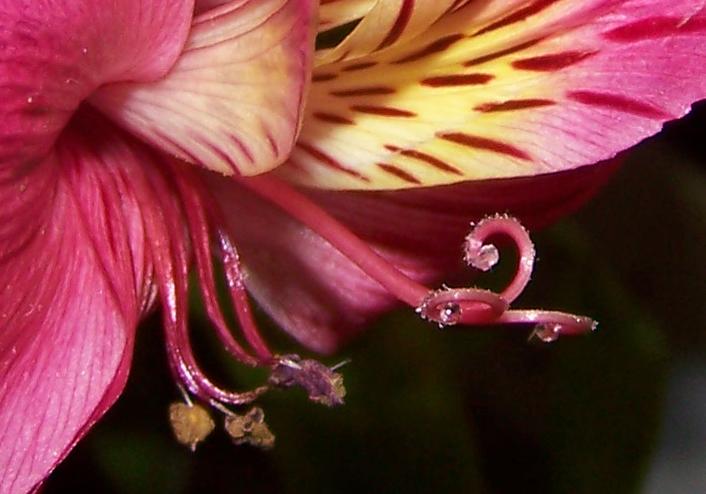 91 Pink Flower