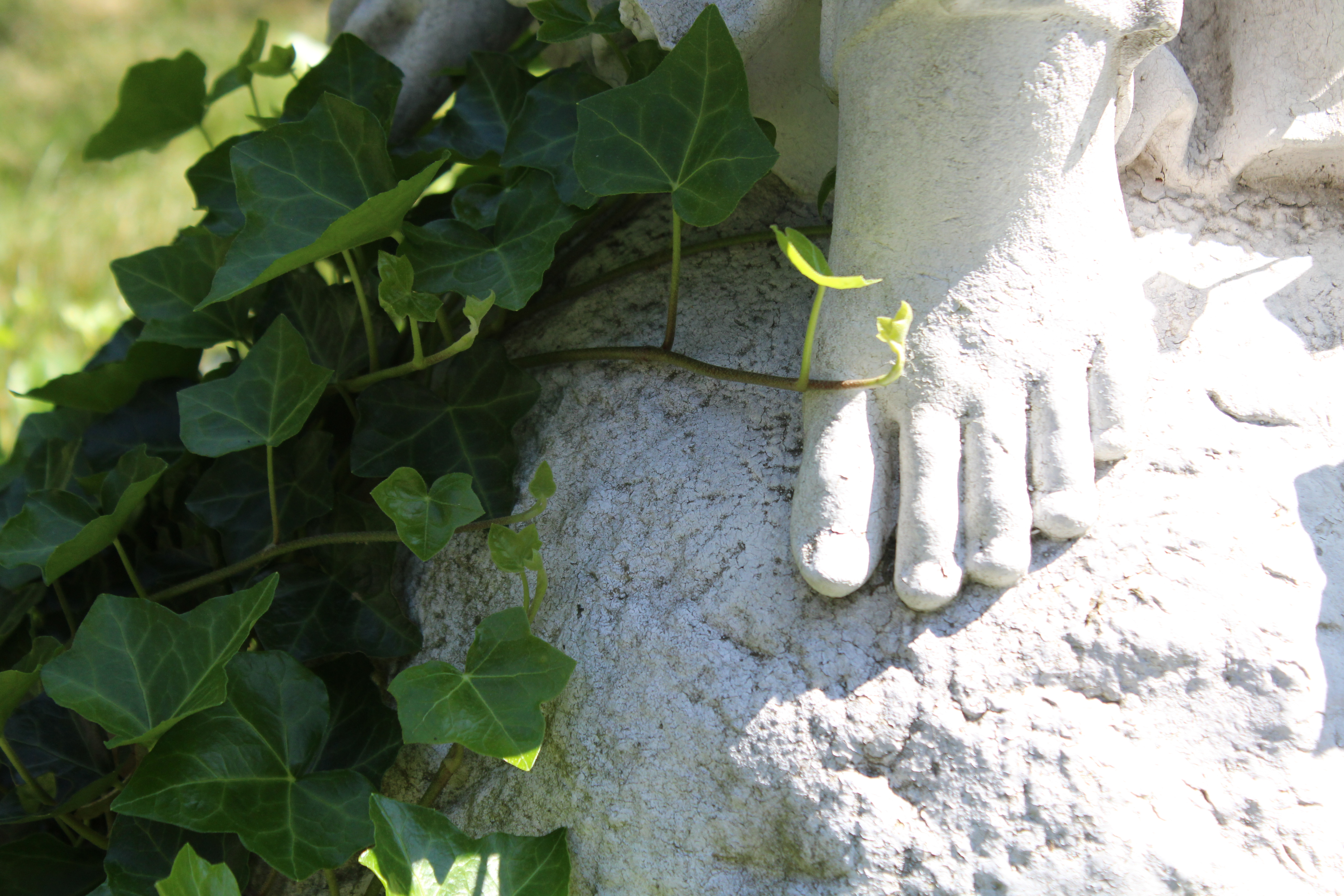 Ivy Foot